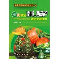 图说棚室南瓜.西葫芦栽培关键技术-棚室蔬菜栽培